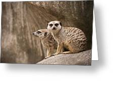 The Rock Of Meerkats Greeting Card