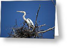 The Rookery Greeting Card