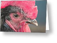 The Rooster Greeting Card
