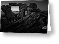 The Roots Of The Sleeping Giant Bw Greeting Card