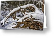 The Roots Of Winter Greeting Card
