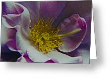 The Rose Bowl Greeting Card