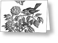 The Roses And The Sparrow Greeting Card