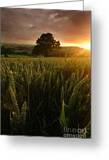The Rural Sunset Greeting Card