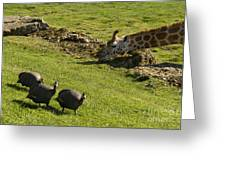 the Safari park Greeting Card