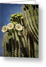 The Saguaro Cactus  Greeting Card