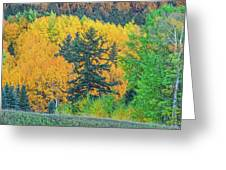 The Sanctity Of Nature Reified Through A Photographic Image  Greeting Card