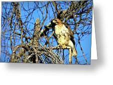 The Search Red Tail Hawk Art Greeting Card