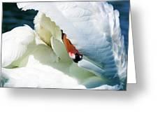 The Seductive Swan Greeting Card
