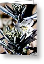 The Shy Desert Lily Greeting Card