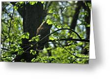 The Shy Owl Greeting Card