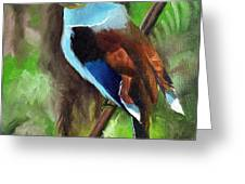The Silver Breasted Broadbill Greeting Card