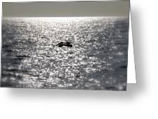 The Silver Sailor Greeting Card