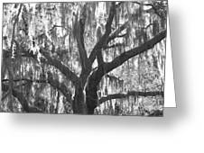 The Silver Tree Greeting Card