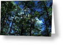 The Skyline Of Susan Creek Indian Mounds Greeting Card