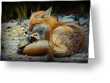 The Sleepy Fox Greeting Card