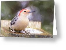 The Smiling Woodpecker  Greeting Card