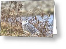 The Snowy Owl Greeting Card