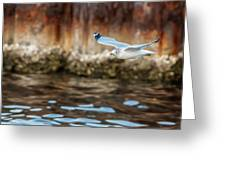 The Soaring Gull Greeting Card