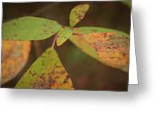 The Soft Intensity Of Fall 6210 H_2 Greeting Card