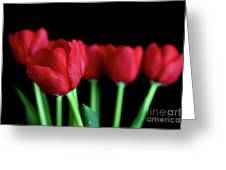 The Softer Tulips Greeting Card by Tracy Hall