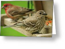Two Finch's Greeting Card