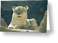 The Sphinx Greeting Card
