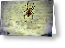 The Spider Waits Greeting Card