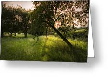The Spring Orchard Greeting Card