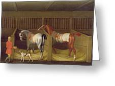 The Stables And Two Famous Running Horses Belonging To His Grace - The Duke Of Bolton Greeting Card