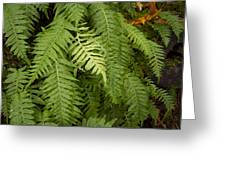 The Standout Fern Greeting Card