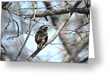 The Starling Greeting Card