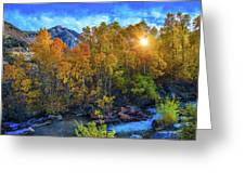 The Stars Of Autumn Greeting Card