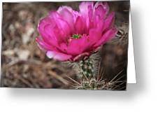 The Stigma Of Beauty II Greeting Card