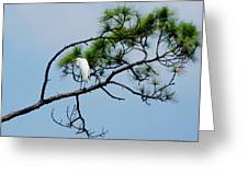 The Stoic Egret - Debbie May Greeting Card
