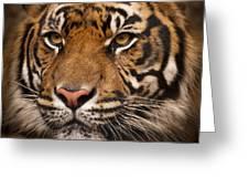 The Sumatran Tiger Cat Greeting Card