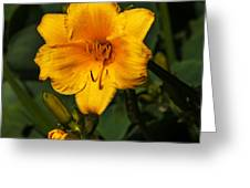 The Summer Blooms Greeting Card