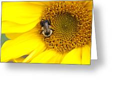 The Sun And The Bee Greeting Card
