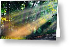 The Sun Beams Greeting Card