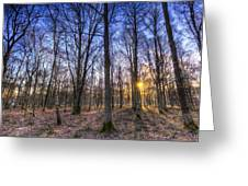 The Sun Ray Forest Greeting Card