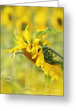 The Sunflower Greeting Card