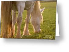 The Sunlight Caught In The Horse Tail Greeting Card