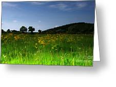 The Sunny Meadow Greeting Card