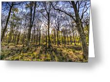 The Sunset Forest Greeting Card