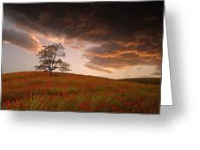 The Sunset Of The Poppies - 2 Greeting Card