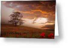 The Sunset Of The Poppies Greeting Card