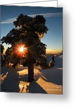 The Sunset Tree  Greeting Card