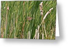 The Swamp Sparrow In-flight Greeting Card