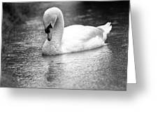 The Swans Solitude Greeting Card