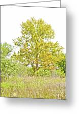 The Sycamore Greeting Card